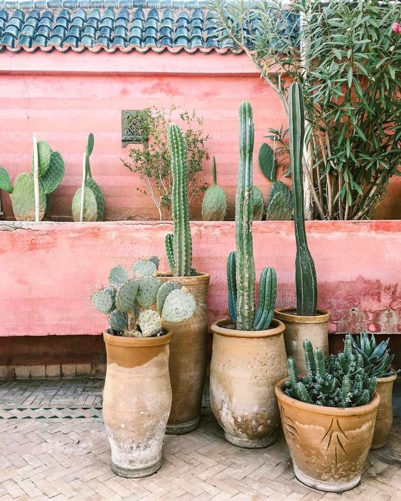 Bohemian tuin cactussen