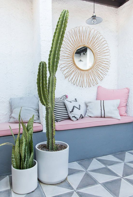Cactussen in tuin