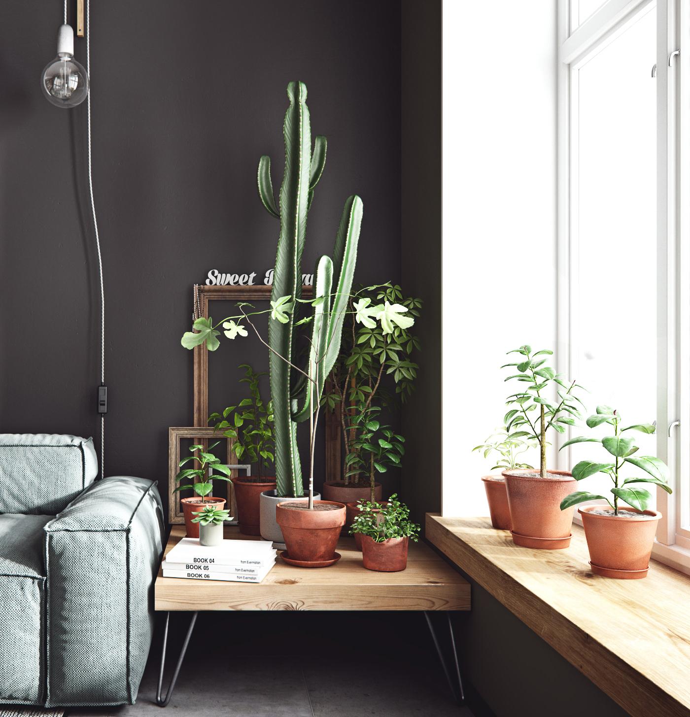 cactussen-terracotta