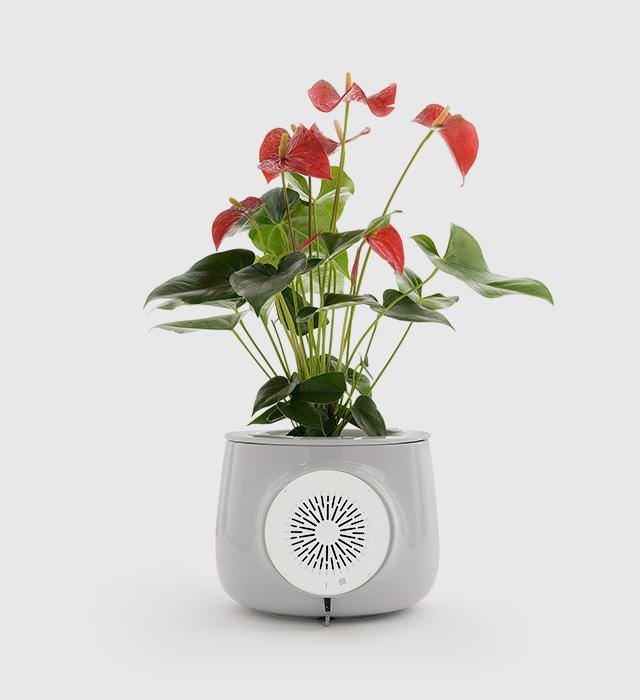 Clairy - een luchtzuiverende plantenpot