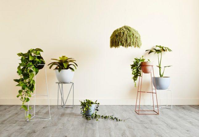 De mooie plantenstandaarden van IVY MUSE