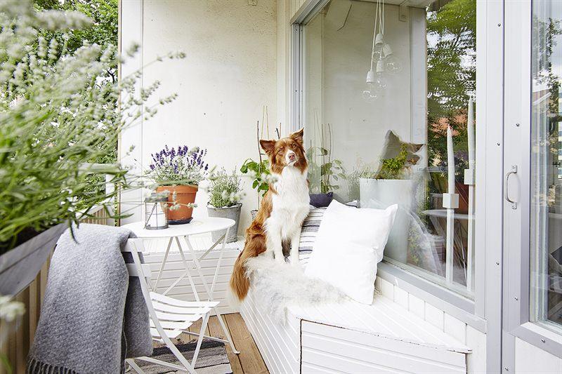Simpel Balkon Ontwerp : Dit kleine balkon is super leuk en knus ingericht interieur inrichting