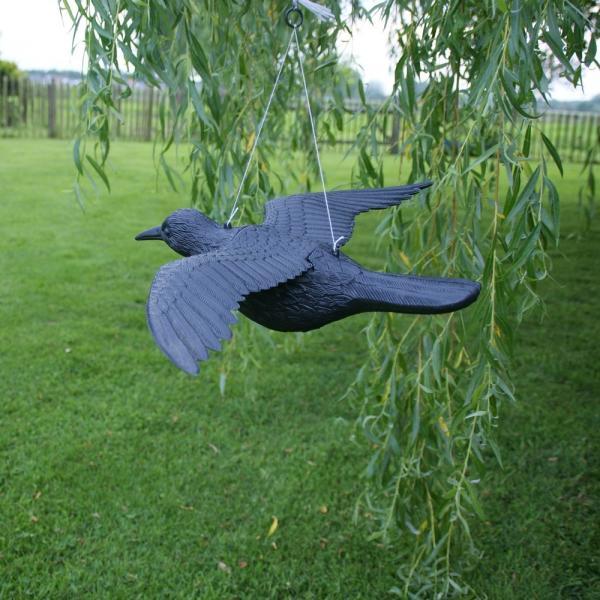 duiven verjagen kraai