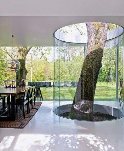 Een boom in huis!