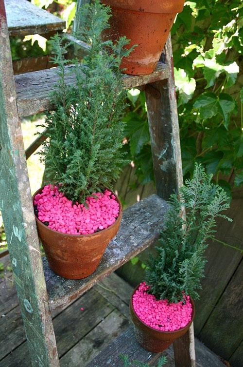 Felle kleuren in de tuin