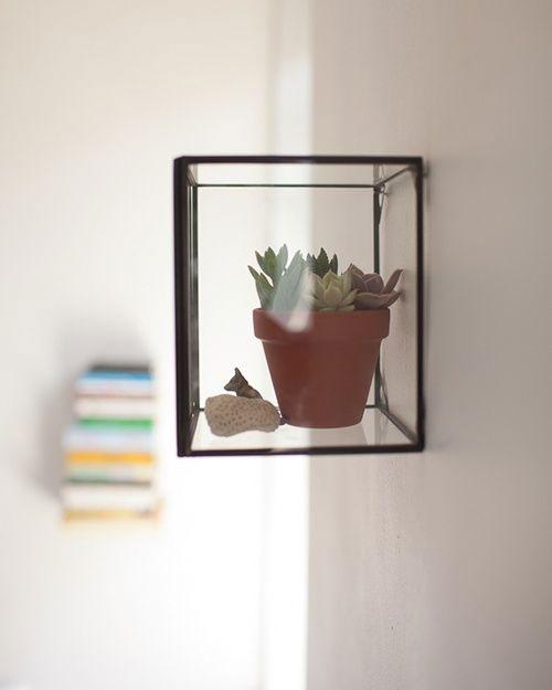 Glazen display boxen