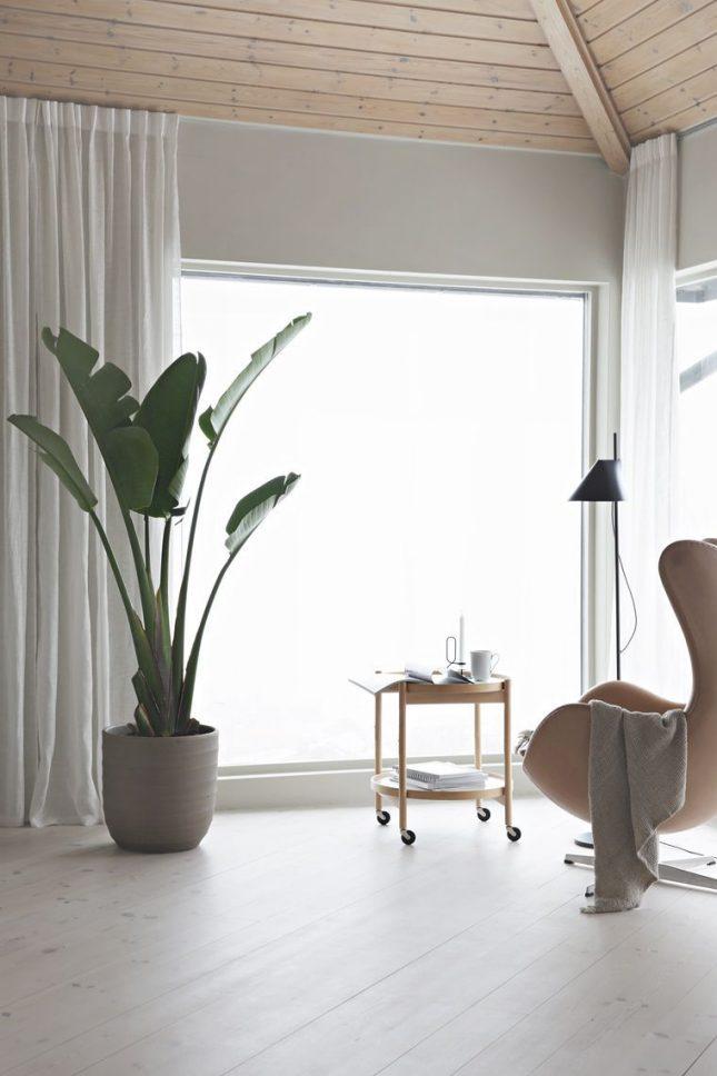 IKEA plant Strelitzia