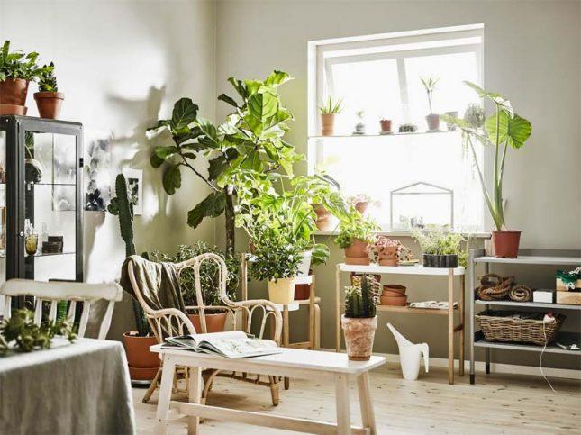 IKEA planten