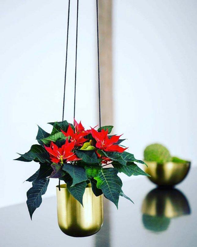 kerstster in planthanger