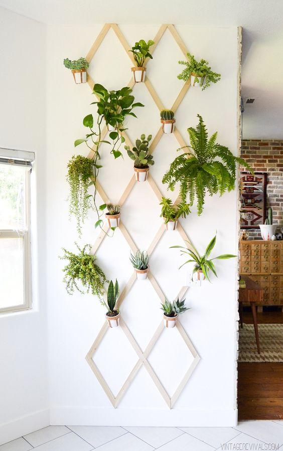 klimrek-planten-binnen