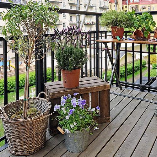 Balkonafscheiding planten