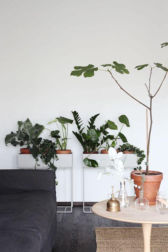 leuke-plantenstandaard