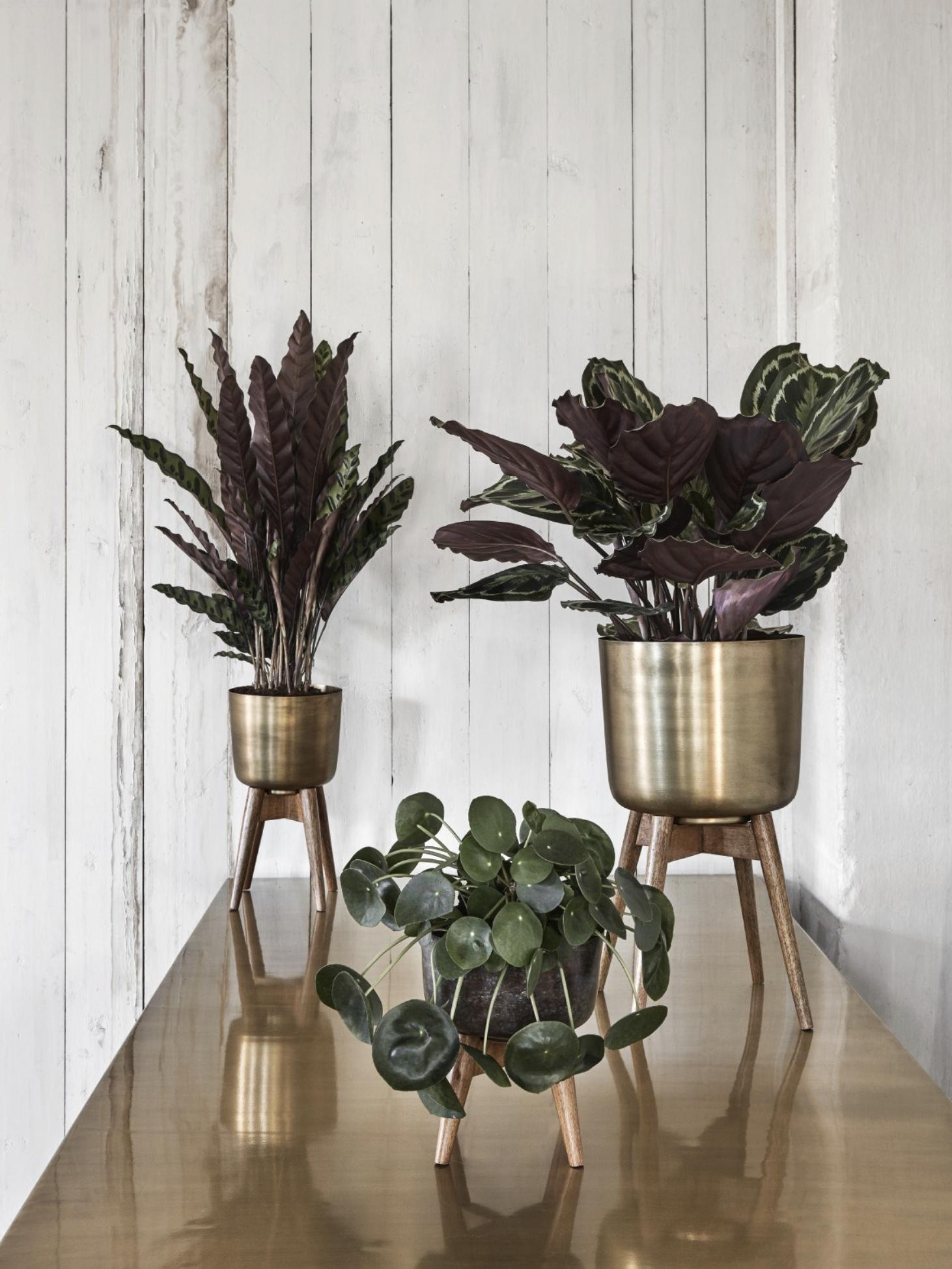 nordal-plantenstandaard