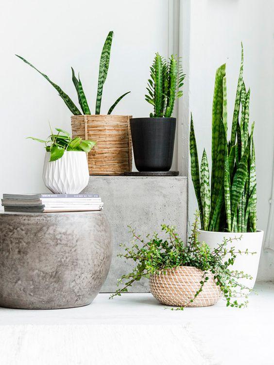 Plant in mand interieur inrichting for Plantas de interior lengua de gato