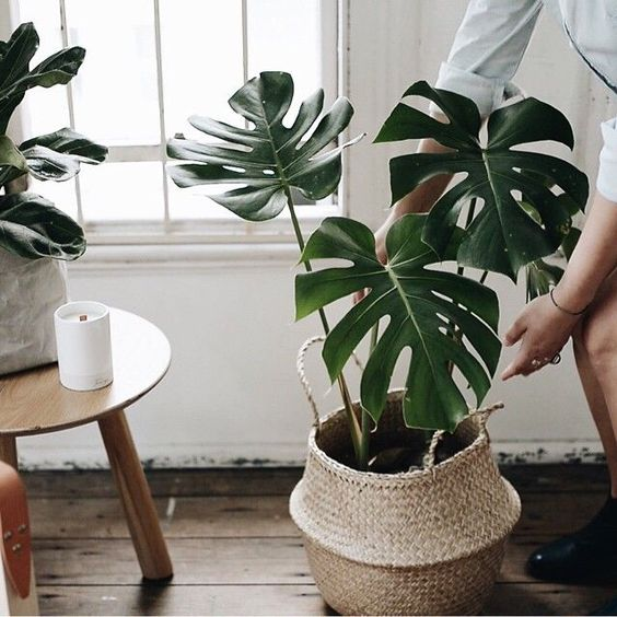Plant in mand interieur inrichting - Good household plants ...