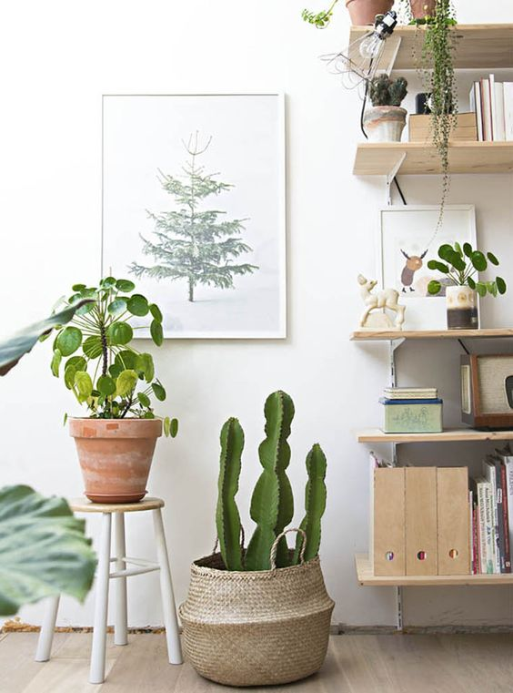 Plant in mand