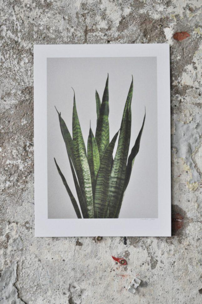 Plant series van studio joop