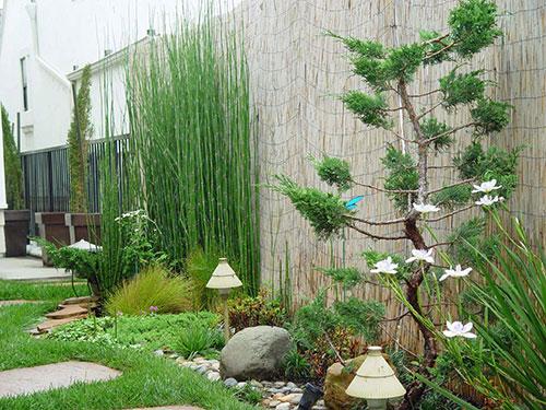 Planten en bomen in de tuin