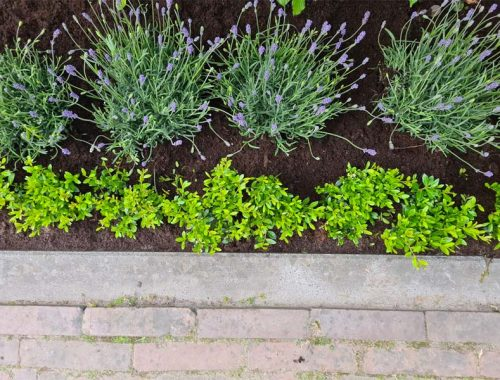 planten border opsieren