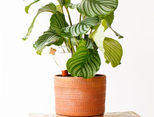 Planten Op Slaapkamer : Slaapkamer inrichten met planten voordelig je ...