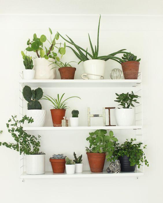 planten-witte-wandplanken