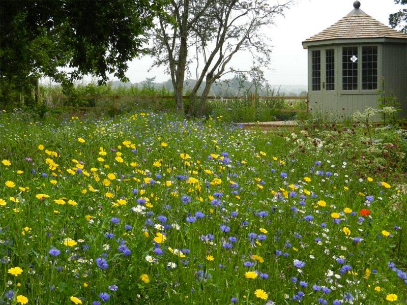 Prachtige wilde bloemen tussen het hoge gras.