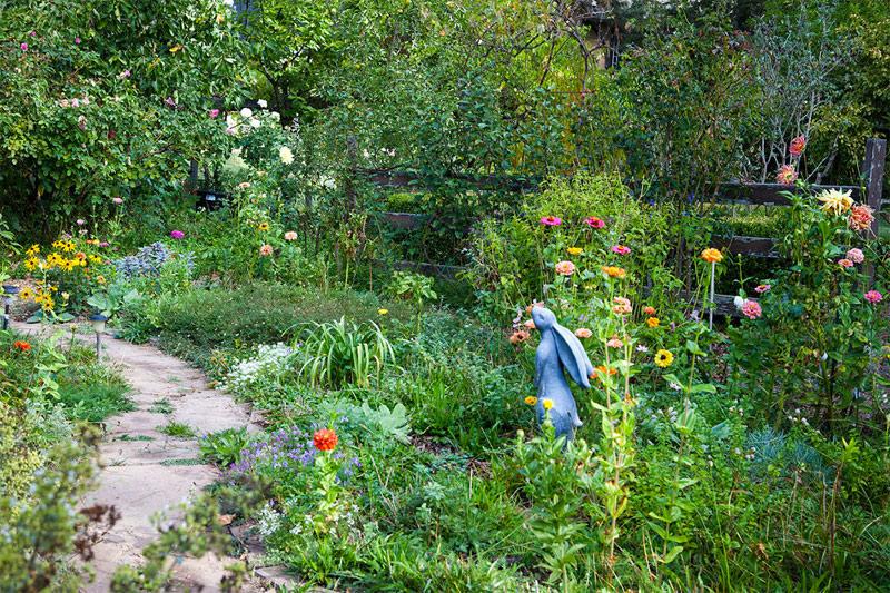 Een mooie romantsiche tuin met zinnia's, dahlia's en andere bloemen rond het gelijknamige konijnenstandbeeld.