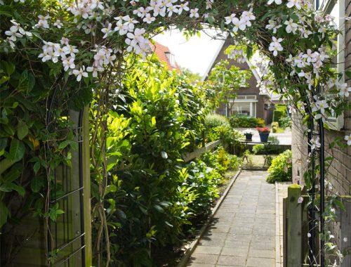 rozenboog in de tuin
