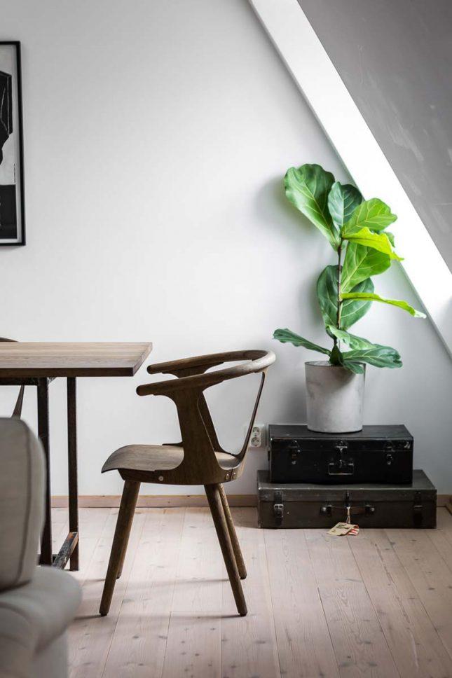 scandinavisch interieur plant op koffer