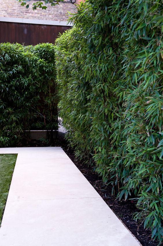 schutting ideeën bamboe planten