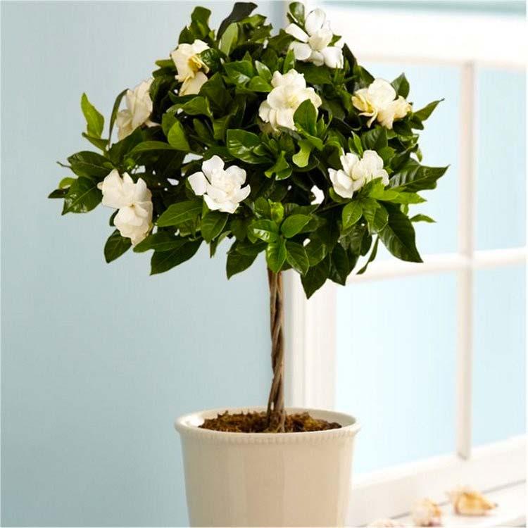 slaapkamer planten gardenia