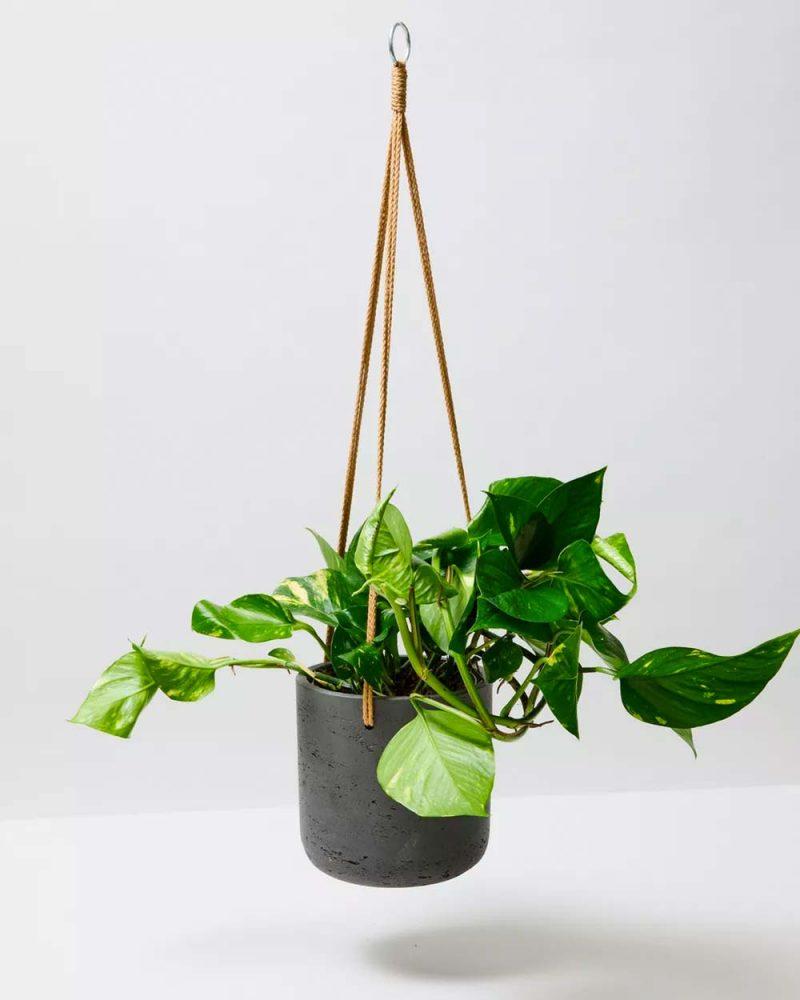 slaapkamer planten golden pothos
