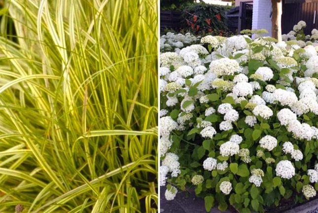 tuin planten border bloemen gras