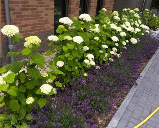 tuin plantenborder