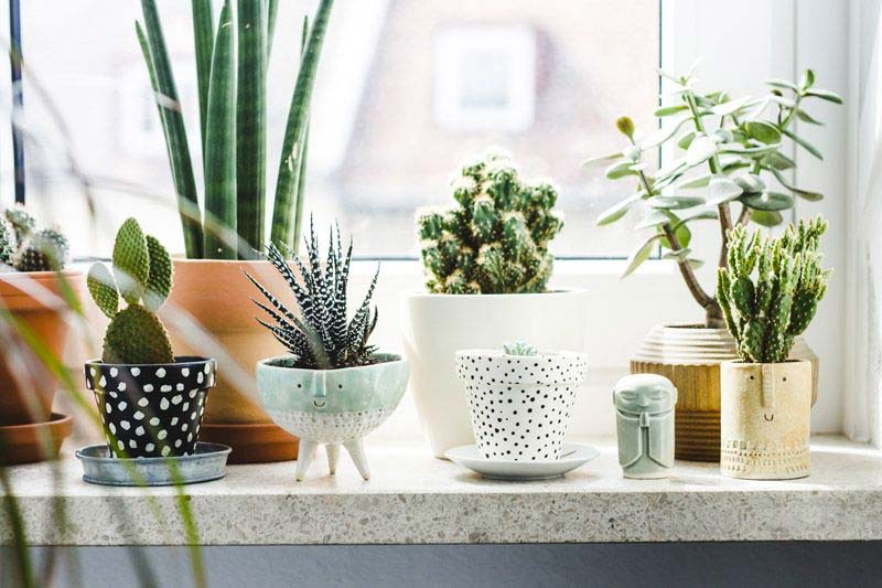 vensterbank decoratie planten