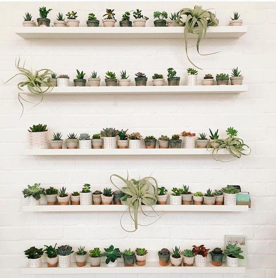 wandplanken-vol-kleine-planten